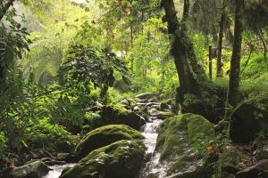 Río Chilacayote b