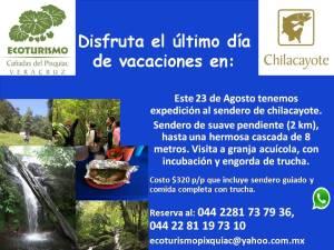 Plantilla Chilacayote